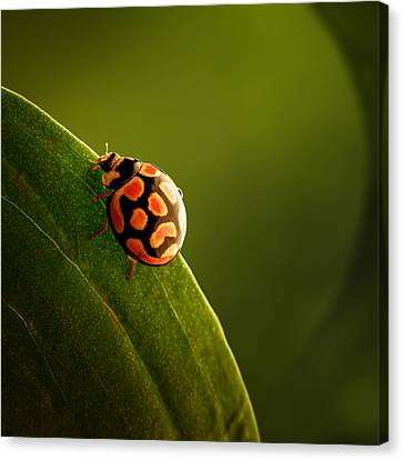 Ladybug  On Green Leaf Canvas Print by Johan Swanepoel