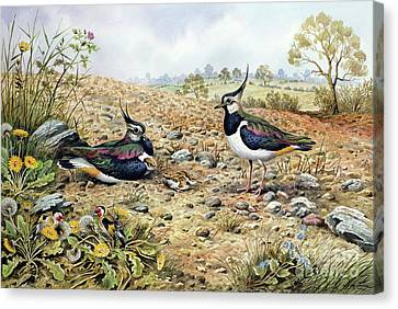 Lapwing Family With Goldfinches Canvas Print by Carl Donner