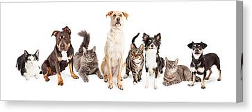 Large Group Of Cats And Dogs Together Canvas Print by Susan Schmitz