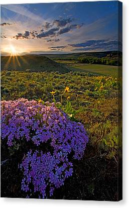 Last Light Of Spring Canvas Print by Mike  Dawson