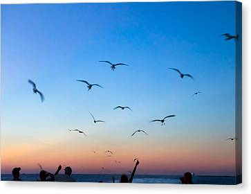 Laughing Gulls In The Evening Sky Canvas Print by Ellie Teramoto