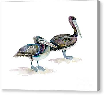 Laurel And Hardy, Brown Pelicans Canvas Print by Amy Kirkpatrick