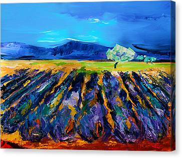 Lavender Field Canvas Print by Elise Palmigiani