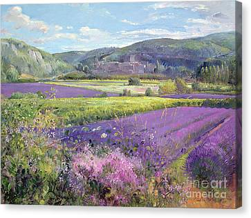 Lavender Fields In Old Provence Canvas Print by Timothy Easton