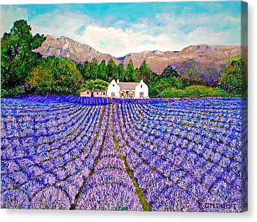 Lavender Fields Canvas Print by Michael Durst