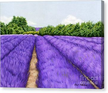 Lavender Fields Canvas Print by Sarah Batalka