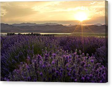 Lavender Glow Canvas Print by Chad Dutson