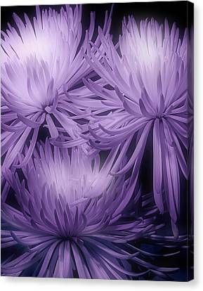 Lavender Mums Canvas Print by Tom Mc Nemar