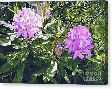 Lavender Rhododendrons Canvas Print by David Lloyd Glover