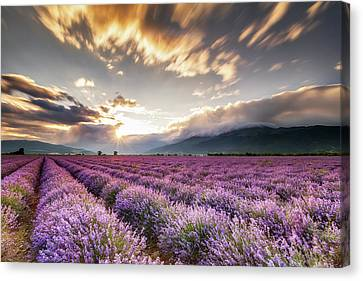 Lavender Sun Canvas Print by Evgeni Dinev