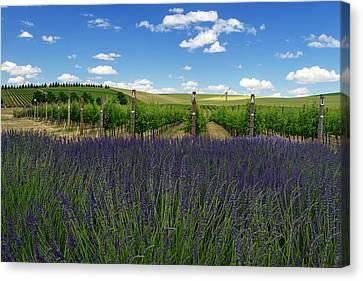 Lavender Vineyard Canvas Print by Mark Kiver
