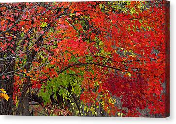 Layers Canvas Print by Ed Smith