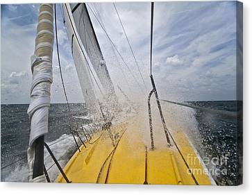 Le Pingouin Charging Upwind Canvas Print by Dustin K Ryan