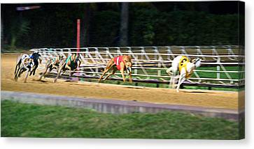 Leader Of The Pack Canvas Print by Keith Armstrong