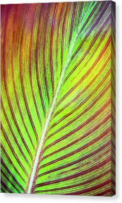Leaf Abstract Canvas Print by Christina Rollo