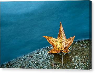 Leaf Canvas Print by Chris Mason