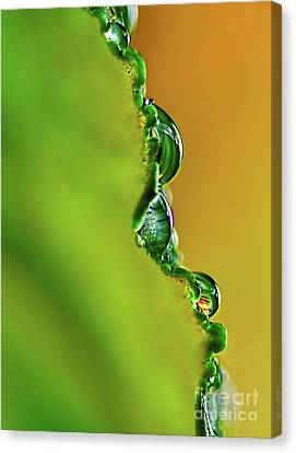 Leaf Profile And Water Droplets Canvas Print by Kaye Menner
