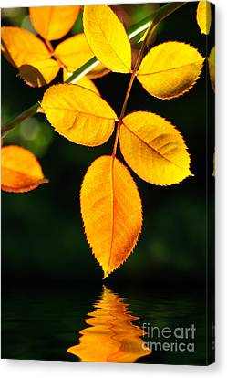 Leafs Over Water Canvas Print by Carlos Caetano