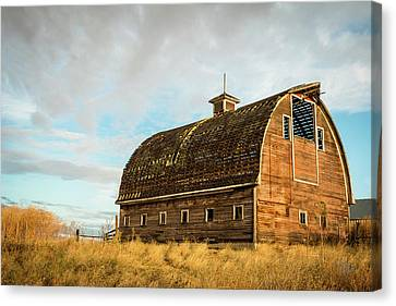 Leaky Roof Canvas Print by Claude Dalley