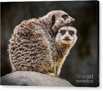 Lean On Me Canvas Print by Jamie Pham
