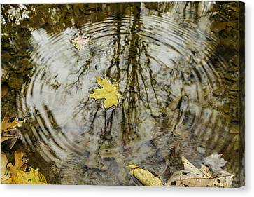 Leaves And Water Canvas Print by Andrew McElvery