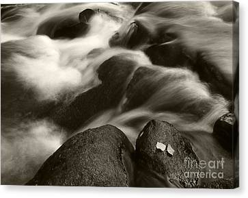 Leaves And Waterfall Canvas Print by Timothy Johnson