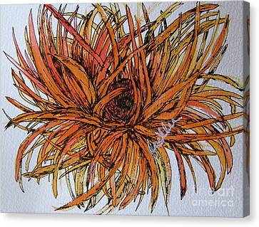 Leggy Gerber Canvas Print by Marcia Weller-Wenbert