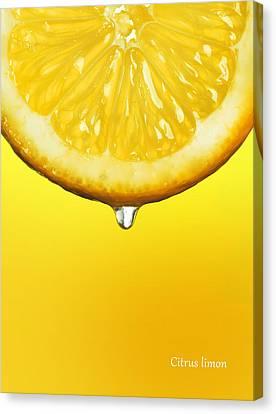 Lemon Drop Canvas Print by Mark Rogan