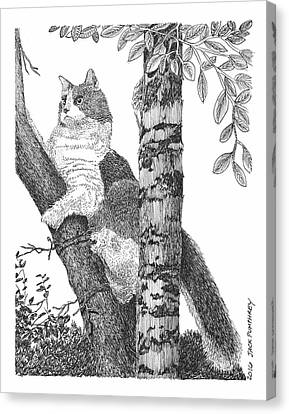 Leo The Cat In The Tree Canvas Print by Jack Pumphrey