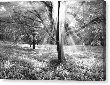 Let There Be Light Canvas Print by Debra and Dave Vanderlaan