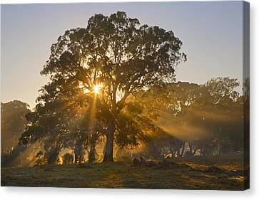Let There Be Light Canvas Print by Mike  Dawson