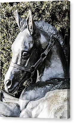 Lexington Foal Canvas Print by Rachel Narvaez