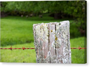 Lichen Covered Fence Post Canvas Print by Karen Wood