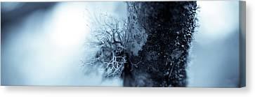 Lichen Macro 1206 Nature Abstract Canvas Print by Frank Tschakert