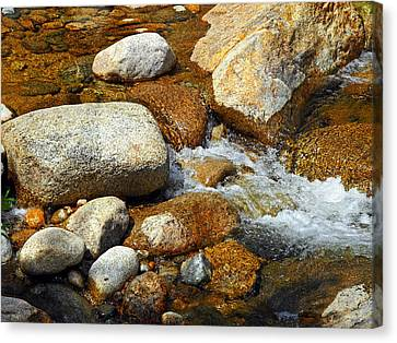 Life Of The Riverbed Canvas Print by Lynda Lehmann