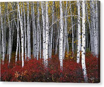 Light In Forest Canvas Print by Leland D Howard