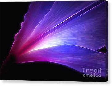 Light Of The Lily Canvas Print by Krissy Katsimbras