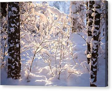 Light Of Winter Canvas Print by Rose-Maries Pictures