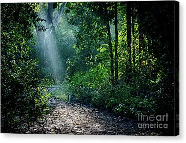 Lighting The Trail Canvas Print by Thomas Gibson
