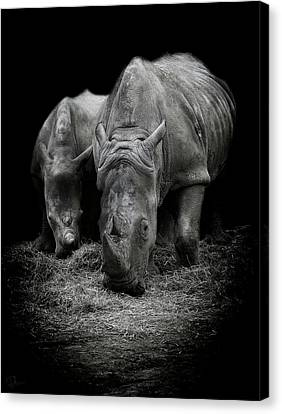 Like Father Like Son Canvas Print by Paul Neville