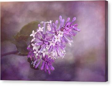 Lilac Blossom Canvas Print by Tom Mc Nemar