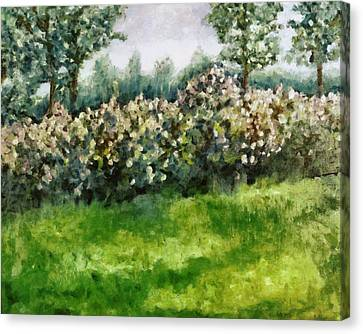 Lilac Bushes In Springtime Canvas Print by Michelle Calkins