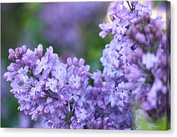 Lilacs Canvas Print by Diana Haronis