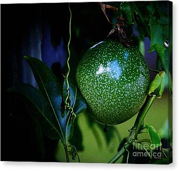 Lilikoi Vine 2 Canvas Print by Cheryl Young