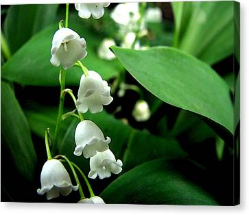 Lily Of The Valley  Canvas Print by Michelle Calkins