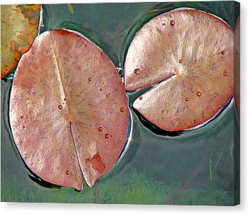 Lily Pads 1 Canvas Print by Diana Douglass