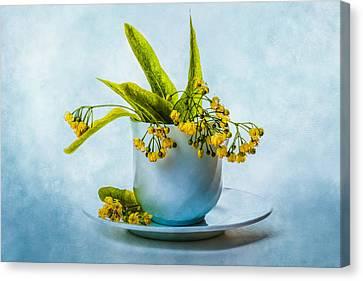 Linden Tree Flowers In A Teacup Canvas Print by Alexander Senin