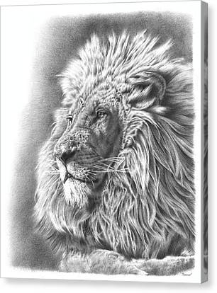 Lion Drawing Canvas Print by Remrov Vormer