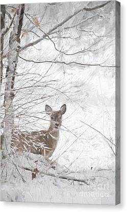 Little Doe In Snow Canvas Print by Benanne Stiens