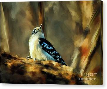 Little Downy Woodpecker In The Woods Canvas Print by Lois Bryan
